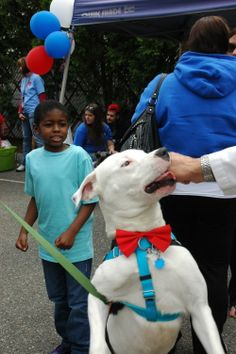 Check out that sweet red bow tie! This dog is stylin'! ;-)