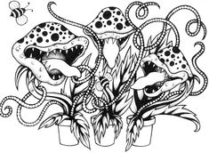 Sundews the best carnivorous plant for catching fruit flies venus fly trap carnivorous plant coloring sheet ccuart Choice Image