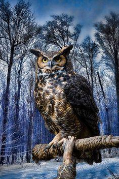 Owl wallpaper by Zsoooooomleeeee - 99 - Free on ZEDGE™ Owl Wallpaper Iphone, Animal Wallpaper, Cute Owls Wallpaper, Beautiful Owl, Animals Beautiful, Cute Animals, Owl Photos, Owl Pictures, Nocturnal Birds