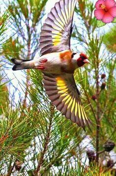 · The Goldfinch All Birds, Little Birds, Pretty Birds, Beautiful Birds, Bird Artwork, Bird Theme, Wild Creatures, Goldfinch, Colorful Birds