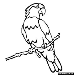 imperial parrot online coloring page