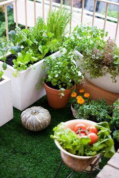 tomaten anbau topf-kübel balkon gemüse-sorten geeignet | balkon, Hause und garten