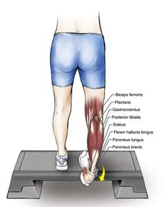 6 Exercises to Stretch Your Toes, Ankles, Soleus and Gastrocnemius Muscles - The Health Science Journal Stretches Before Workout, Calf Stretches, Muscle Stretches, Stretching, Stretch Calf Muscles, Peroneus Longus, Soleus Muscle, Gastrocnemius Muscle, Physical Therapy