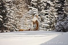 A horse in a fairy winter landscape