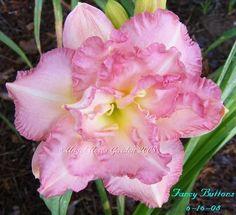http://www.pinterest.com/ladybugone/beautiful-flowers/  Daylily 'Fancy Buttons'