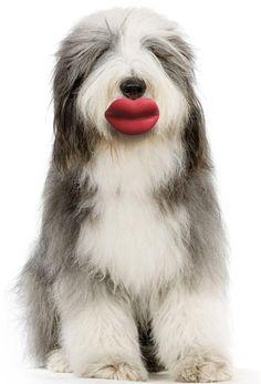 Humunga lips toy