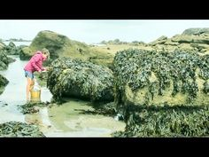 ▶ Foraging Seaweed: Harvesting a French Coastal Superfood!
