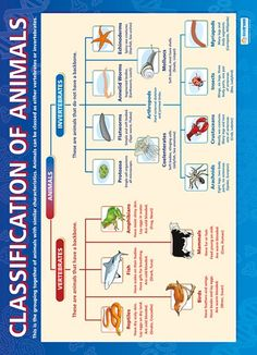 Classification of Animals | Science Educational School Posters