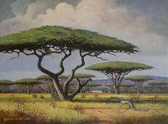 Framed size: The camel thorn tree is a conspicuous shade tree of great importance wherever it grows . It is sometimes called the umbrella thorn tree. Big Tree Drawing, Art Pictures, Photos, Africa Painting, African Tree, Safari, Twisted Tree, Acacia, Unique Trees