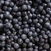 How to Grow Blueberry Plants From Seed   eHow... unless I just want to buy a blueberry plant!