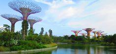 Gardens by the Bay - Die vertikalen Gärten Taiwan, Vietnam, Gardens By The Bay, Wings, Album, Blog, Singapore, Helpful Tips, Beautiful Places