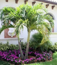 50 Florida Landscaping Ideas Front Yards Curb Appeal Palm - Flower Garden İdeas İn Front Of House Palm Trees Garden, Palm Trees Landscaping, Backyard Trees, Florida Landscaping, Florida Gardening, Tropical Landscaping, Modern Landscaping, Front Yard Landscaping, Landscaping Ideas