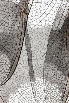 Fragile Beauty - dragonfly wing close up - delicate nature; natural surface pattern inspiration