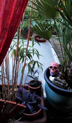 Plants, Etsy, Shopping, Skull And Crossbones, Handmade, Flora, Plant, Planting