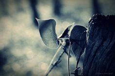 Fotografia de Butterfly | Olhares.com