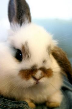 Cute little bunny face