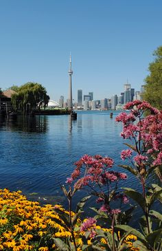 Toronto from Toronto Island pictures beauty Ottawa, Toronto Skyline, Downtown Toronto, Torre Cn, Quebec, Toronto Ontario Canada, Visit Toronto, Pvt Canada, Vancouver