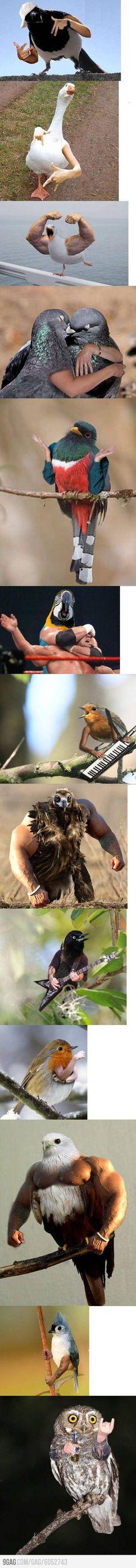 Birds with arms, weirdest thing everrrr!!