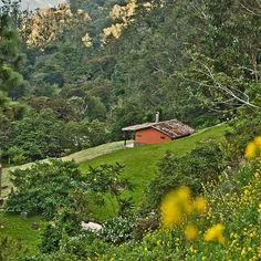 ¡Verde que te quiero verde! . . . ¿No te gustaría perderte en la inmensidad de las montañas con el cielo abierto para ver las más hermosas estrellas?. . . #circuitodelaexcelencia #posadas #posadasvip #turismo #tachira #cobre #hospedaje #pasionporlosdetalles #naturaleza #cabanas #amor #flores #instapic #instamoment #bestoftheday #instalovenezuela #igers #venezuela #sellodecalidad