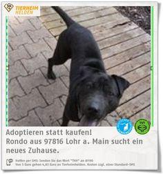 Rondo kam durch eine Zwangsräumung ins Wally Banger Tierheim.  https://www.tierheimhelden.de/hund/tierheim-lohr_a_main/rasse/rondo/10938-0/Rondo  Rondo ist ein souveräner Rüde, der aber noch in eine Hundeschule sollte.