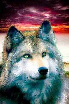 Wolf's are so amazing! Wolf Images, Wolf Photos, Wolf Pictures, Beautiful Wolves, Beautiful Dogs, Fantasy Wolf, Fantasy Art, Tier Wolf, Wolf Husky