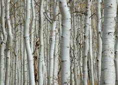 behang bomen patroon