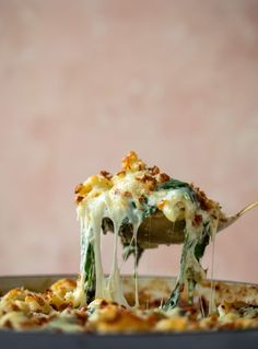 Spinach Mac and Cheese – Creamed Spinach Mac and Cheese - comfort food Spinach Mac And Cheese, Cheesy Mac And Cheese, Creamed Spinach, Baby Spinach, Mac Cheese, Cheese Dishes, Pasta Dishes, Pasta Meals, Dinner Dishes