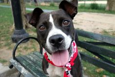 ATHENA aka OMPUNG - A1087153 - - Manhattan  Please Share:TO BE DESTROYED…
