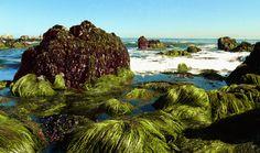 Seaweed_Rocks2_wiki.jpg (3449×2036)