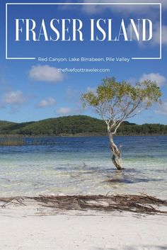 Despite being close to land, Fraser Island is considered a remote island. The beauty of the Red Canyon, Lake Birrabeen & Pile Valley are bound to amaze you. Read more at www.thefivefoottraveler.com
