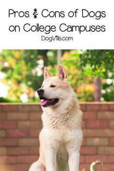 Dogs on Campus at Pet-Friendly Colleges: A Help or Hindrance? Are dogs on campus a help or a hindrance? Read on to discover both the pros and cons of allowing students to keep dogs at college. Cat Care Tips, Dog Care, Pet Tips, Dog Kennel Designs, Pumpkin Dog Treats, Group Of Dogs, Homemade Dog Food, Dog Agility, Healthy Dog Treats