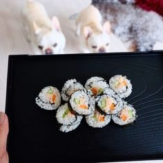 Healthy Dogs Guide: Diet and Nutrition Tips - A nutritious, balanced diet is indispensable to keeping your dog healthy. Learn what you should be feeding your dog at every stage of its life. * Click on the image link for more details. Make Your Own Sushi, How To Make Sushi, Pure Dog Food, Making Sushi Rolls, Cooking Salmon Fillet, Sushi Party, Dog Bakery, Dog Diet, Can Dogs Eat