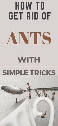 Deep Cleaning Tips, House Cleaning Tips, Cleaning Solutions, Spring Cleaning, Cleaning Hacks, Get Rid Of Ants, Homemade Toilet Cleaner, Clean Baking Pans, Glass Cooktop