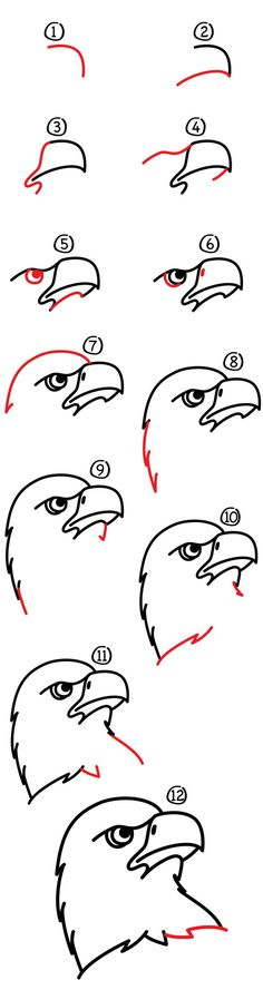 How To Draw A Realistic Bald Eagle Head Art For Kids Hub is part of pencil-drawings - How to draw an eagle! Eagles are so cool looking, and Chuckers loved doing this step by step, hope your kids do too! Bird Drawings, Easy Drawings, Animal Drawings, Pencil Drawings, Charcoal Drawings, Eagle Head, Bald Eagle, Drawing For Kids, Drawing Tips