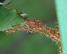 What have you learned from ants? - Quora