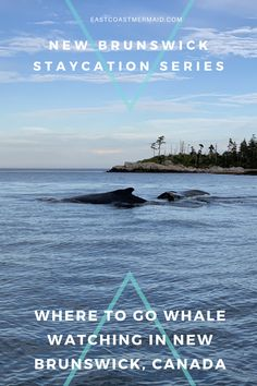 Enjoying New Brunswick this summer? We put together this handy little guide to our THREE favourite whale watching destinations (and tour companies) to help make your planning easy!  #TravelNewBrunswick #NewBrunswickTourism #WhaleWatching #TravelGuide Whale Watching Destinations, Whale Watching Tours, New Brunswick Tourism, Ontario Travel, Island Cruises, Canadian Travel, Staycation, Day Trip, Where To Go