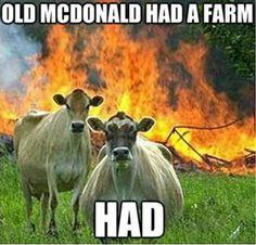 The Liam Neeson of the Cow world.