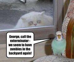 Call the exterminator!