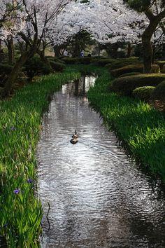 兼六園 曲水に鴨がたてるさざ波風情 Kanazawa, Railroad Tracks, Scenery, Country Roads, Japan, Landscape, Paisajes, Japanese, Nature