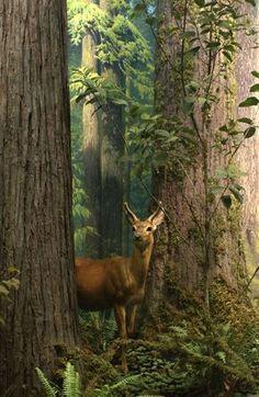 Druids Trees: #Deer.