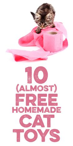 10 (Almost) Free Homemade Cat Toys