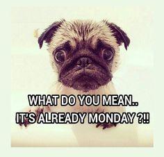 Schon wieder Montag?
