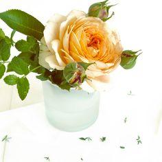 una rosa <3