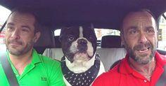 Puso una cámara en el coche, pero cuando el perro hace ESTO… ¡No me lo puedo…