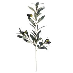 Purchase the Green Olive Stem by Ashland® at Michaels. Team this simple yet pretty olive stem with berry picks, carnations and ferns to create a lovely floral centrepiece. Stairwell Wall, Iron Wire, Michael Store, Floral Centerpieces, Carnations, Custom Framing, Olive Green, Berries, Plants