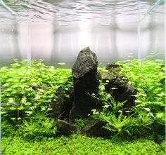 You're my shelter #Aquascaping #iwagumi