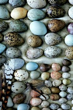 collection of birds' eggs for easter egg decorating inspiration