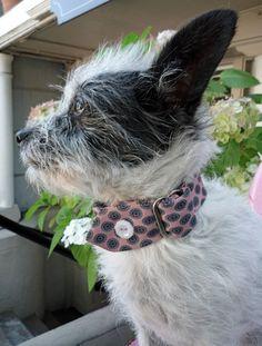 Madmen Doggies, pre-owned men's neckties dog collars - designed by Thwap