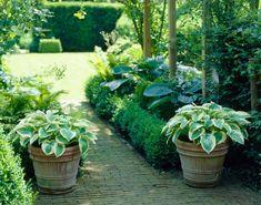 Creative Ways to Use Hostas - Longfield Gardens