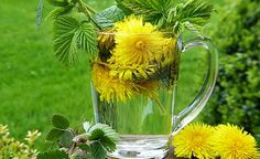 Dandelions in food& natural remedies. We will cover medicinal properties of dandelions its effect on our health dandelion in recipes herbs herbs herbs for health Rheumatoid Arthritis Symptoms, Arthritis Remedies, Dandelion Wine, Dandelion Leaves, Dandelions, Thyroid Health, Natural Home Remedies, Wine Making, Yellow Roses
